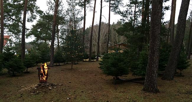 Beste Spielothek in Kirchberg im Wald finden